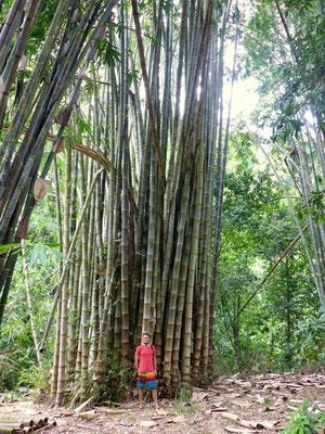kleiner Mann vor einem riesen Bambus!!!
