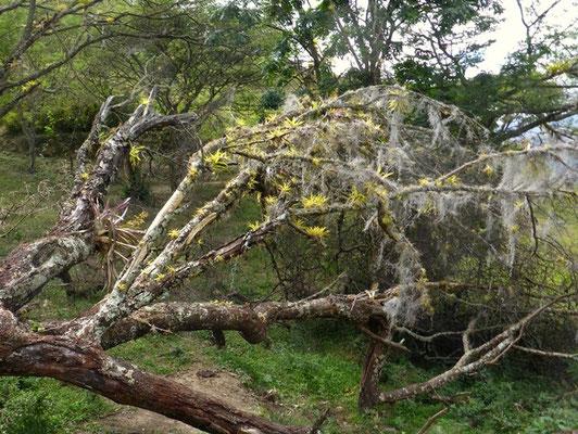 Verzauberte Bäume - wie im Märchen