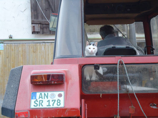 Unser Kater Felix beim Traktorfahren