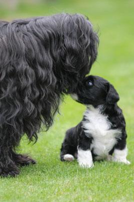 H-Wurf made of Dog's Wisdom 09/2019_draussen 12