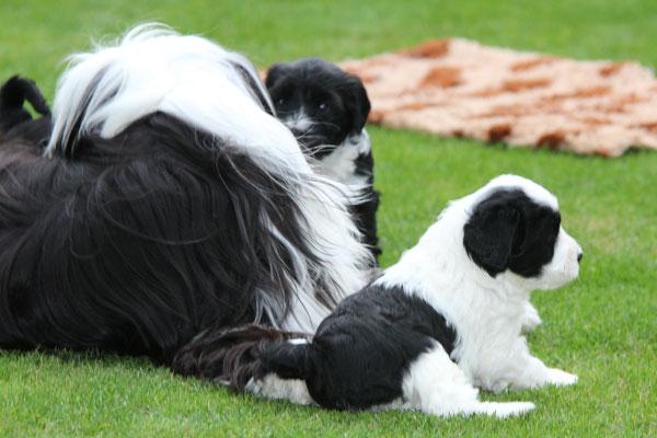 H-Wurf made of Dog's Wisdom 09/2019_draussen 18