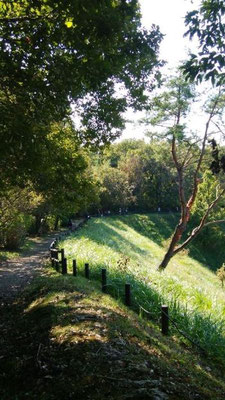 斜めに生える木。  講演会「道と水が出合う時」の佐川先生の話を思い出しながら歩きます。