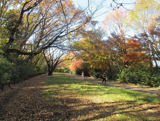 尾根緑道  町田市内にある全長およそ8kmの緑道である。 1943年(昭和18年)に築造された未舗装の戦車用テストコースの一部であり、 総延長約30 kmの道路計画だった。以前は「戦車道路」と呼ばれていた。