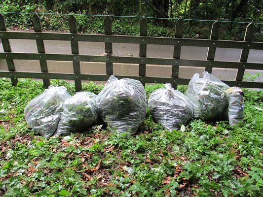 90㍑袋・5袋と投棄ゴミ1袋   公園緑地課に電話し処分をお願いします。