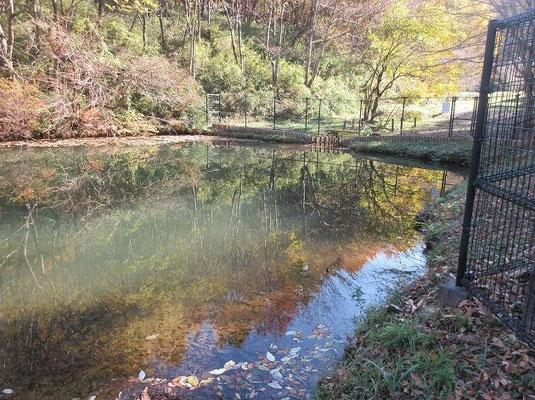 内裏池(だいりいけ) 江戸末期に京の内裏から移り住んだ能楽師がこの地に居たことに由来との説があります。