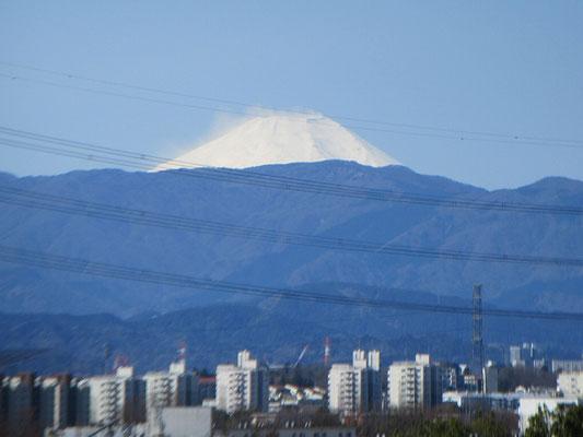 この所霞んでいた空気がすっきりし、富士山も鮮明に見えました。