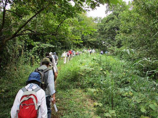 鶴見川源流地区   長い坂を上ってよこやまの道に戻ります。