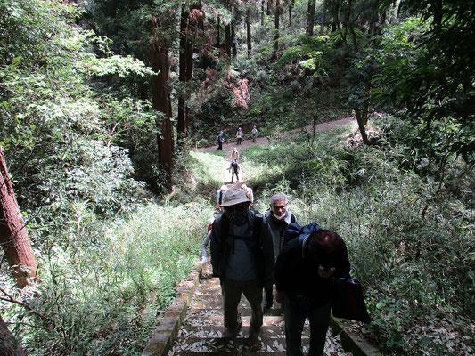 本丸への階段   昼食前の約90段の階段、午前最後の一頑張り。