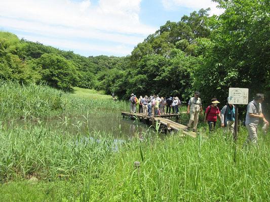トンボ池  小山田緑地の大久保分園にある池。  丘陵からの湧き水を利用して作られ、初夏にはいろいろなトンボたちが産卵にやってきます。