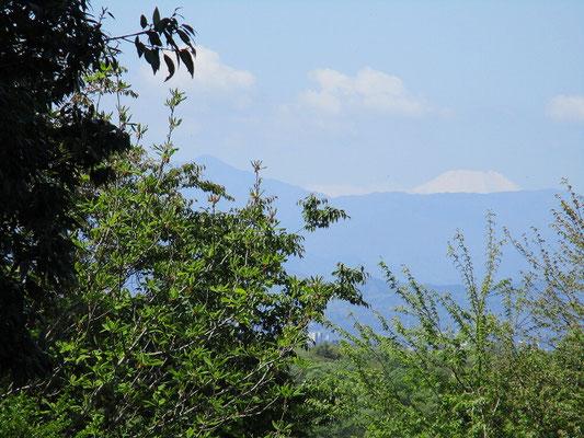 蛭が岳と富士山   中坂公園へ向かう途中くっきりと見えていました。