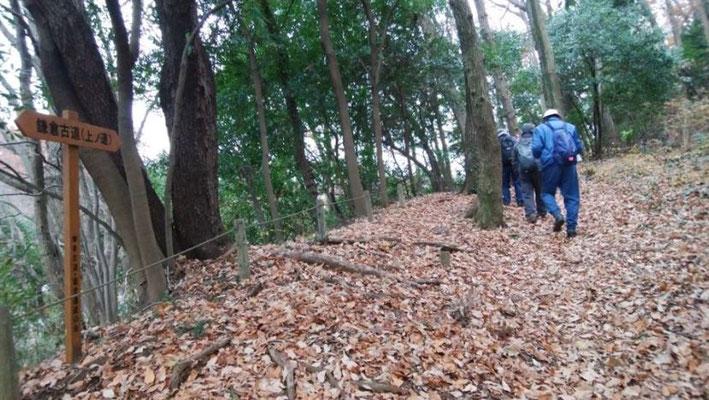 鎌倉古道(上ノ道) 跡を歩く。