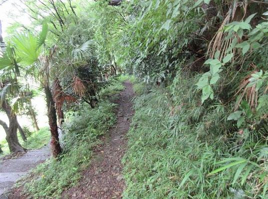 ・蘆花記念公園   逗子の桜山にある徳冨蘆花の名を冠した公園です。 ・推定/古東海道・ヤマトタケル道   園内に日本武尊が東国の蝦夷(えみし)征服の東征時に相模から上総へ向かう時に通ったと推定される古東海道・ヤマトタケル道が残っています。