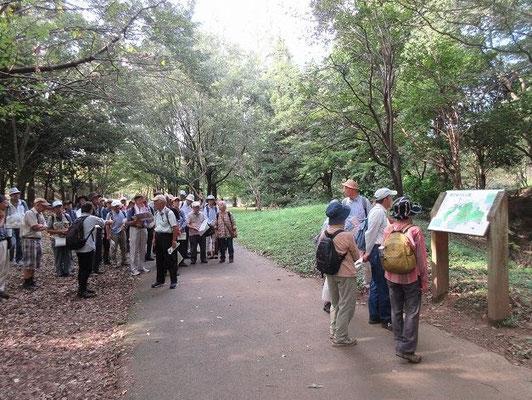 都立桜ヶ丘公園  多摩丘陵自然公園内にある、丘陵と谷間からなる公園です。丘陵公園だけに、地形は高低差数十mと起伏に富んでいます。  園内には雑木林を主体にした自然林があり、自然散策に適しています。 なお、公園の中ほどには、旧多摩聖蹟記念館(多摩市管理)があります。