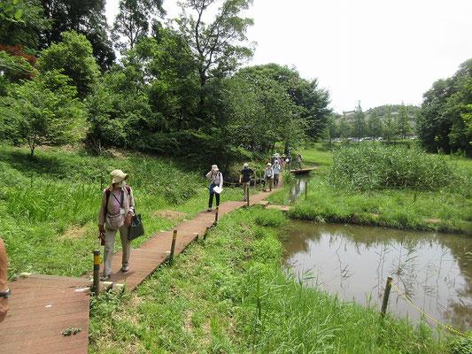 黒川よこみね緑地  生き物の生息環境である自然を残し、昆虫や鳥類など様々な生き物が棲む森となっています。  子供たちが捕まえたザリガニやおたまじゃくし、草花の絵をきながら自然を楽しんでいました。