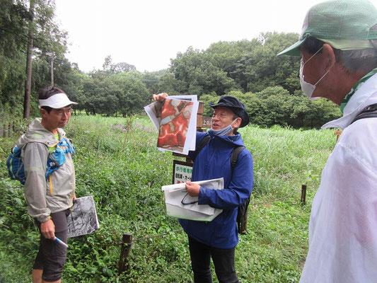 支線鎌倉道を通り華厳院坂の上で赤色地図を使っての説明。 かつてこの付近で3箇所のトレンチ試掘を行ったそうです。