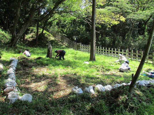 草刈り状況―3