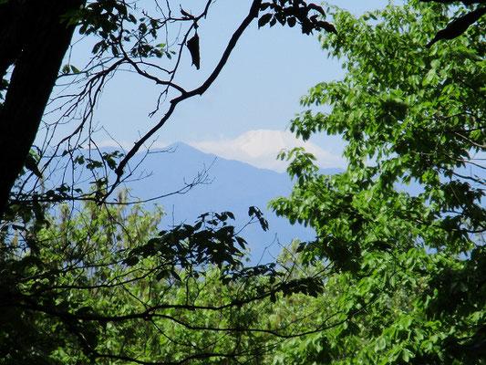 尾根古道の途中から見えた蛭が岳と富士山