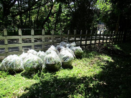 90㍑袋・11袋に枝と投棄ゴミ