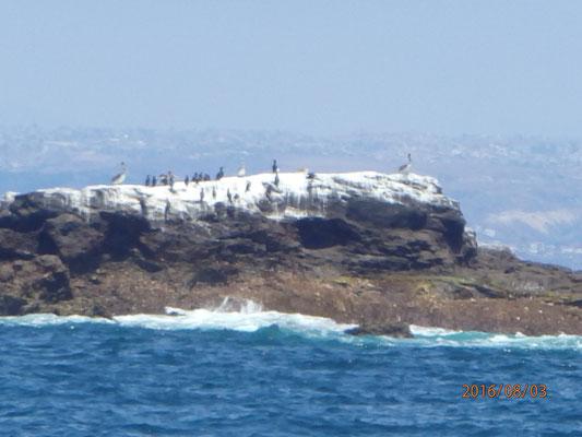 Insel Los Coronados