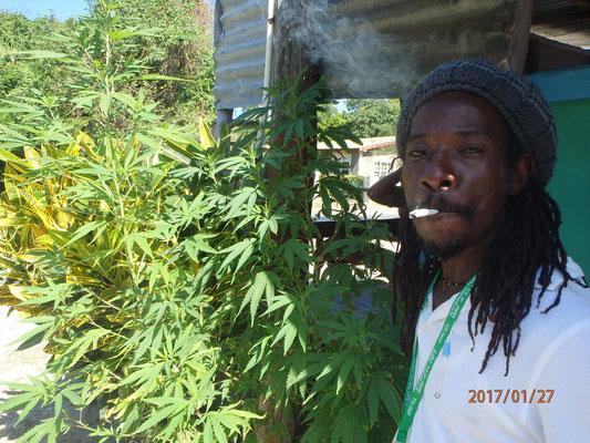 ein Rauch in Jamaica