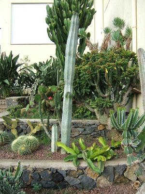 Teil-Ansicht unseres Kaktus-Beetes mit verschiedenen Kakteen-Arten