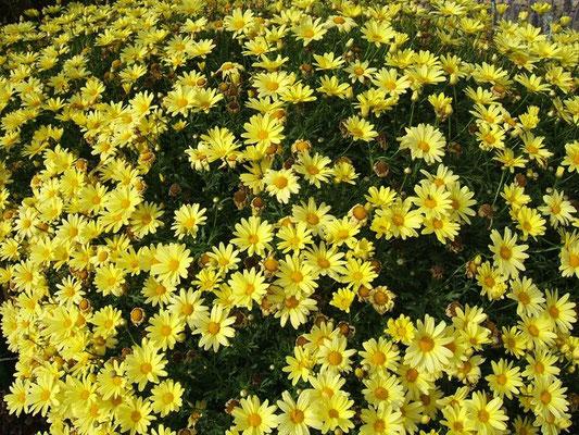 Die Blütenpracht neben der Bank ganz aus der Nähe.