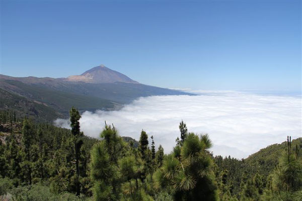 Teide über den Wolken