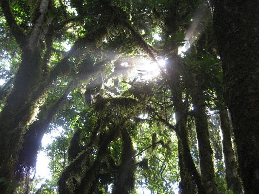Regenwald am Chinobre