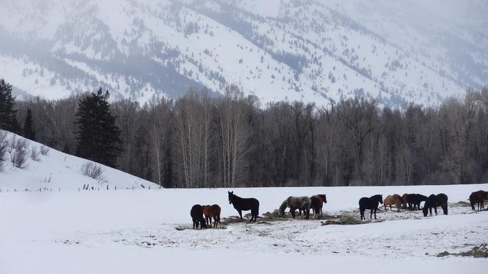 24 Wyoming