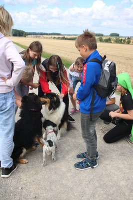 Kennenlernen der Hunde