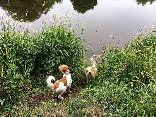 Aila & Kabou an der Lippe (09.06.2018)