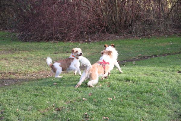 Bo, Benny & Lucky