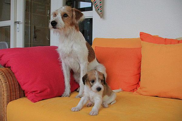Kabou & Carlo (Welpe 9)