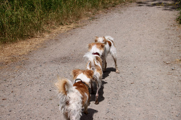 Ruby, Cataleya & Nika