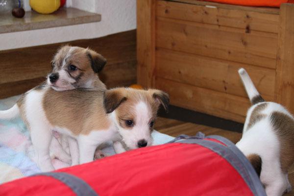 04.01.2019 - 42. Lebenstag: Cooper, Onni & Cara