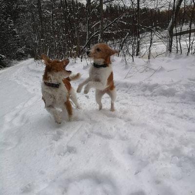 13.12.2019: Alma und Stina toben im Schnee