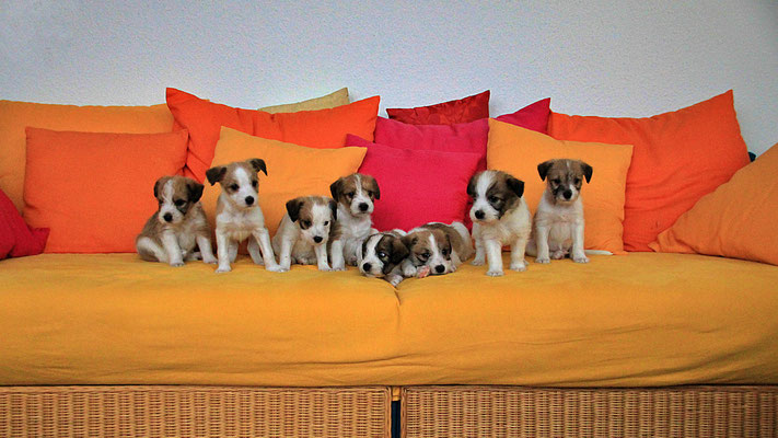 Murmel, Onni, Cara, Carlo, Charlie, Chuko, Cookie & Cooper