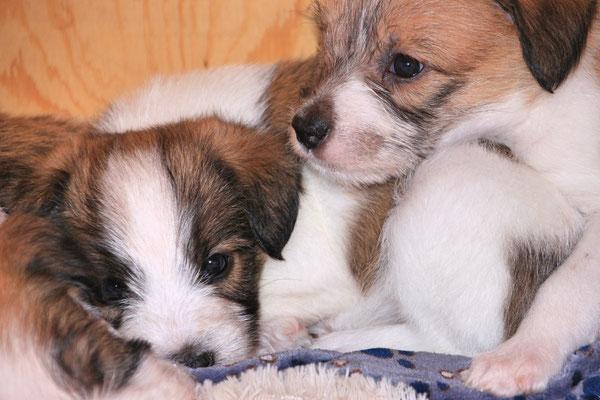 04.01.2019 - 42. Lebenstag: Charlie & Cooper