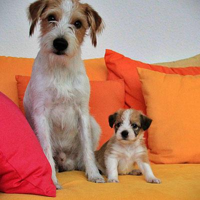 Kabou & Murmel (Welpe 7)