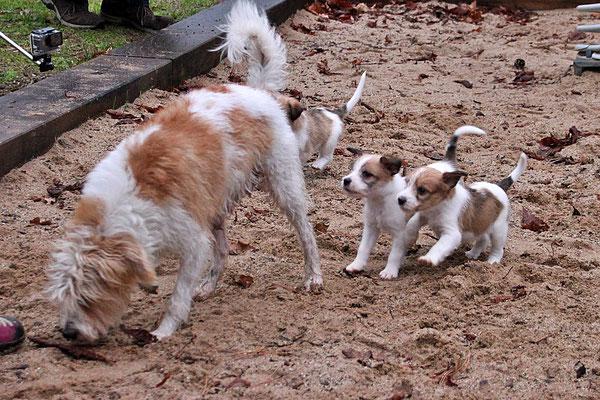 Aila mit Cooper, Chuko & Carlo
