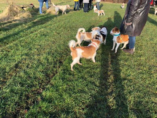 Bo, Cataleya, Lucky, Anton (Gasthund, Cylie, Karli, Bootsmann, Ayko)