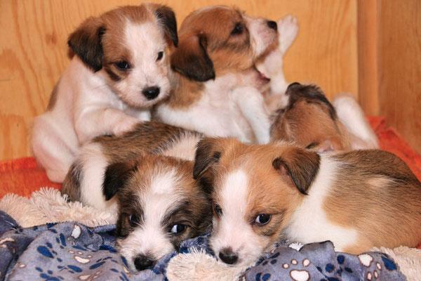 Cara, Carlo, Cooper, Cookie & Onni
