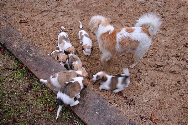 Aila mit Cookie, Charlie, Onnie, Cooper, Carlo, Chuko & Cara