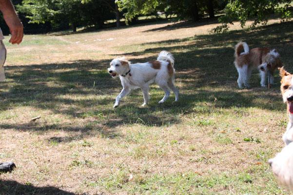 Ruby vom Huvenhoop & Ella vom Rieth Teich