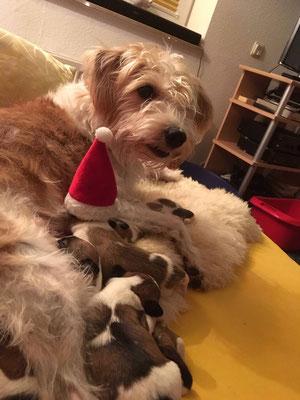 Nikolaus-Kuscheln mit Mama Aila: Cookie, Charlie, Onni und Cara