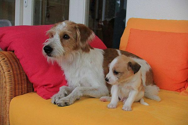 Kabou & Onni (Welpe 3)