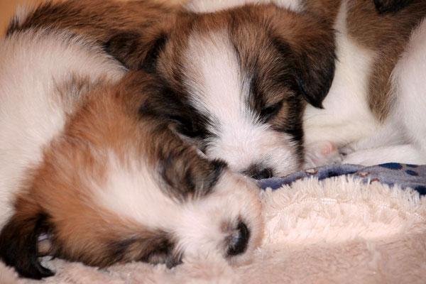 04.01.2019 - 42. Lebenstag: Cookie & Charlie