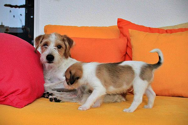 Kabou & Chuko (Welpe 8)