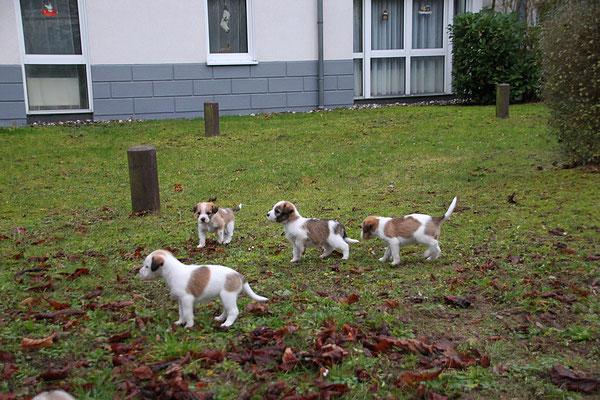 Cara, Murmel, Cookie & Carlo