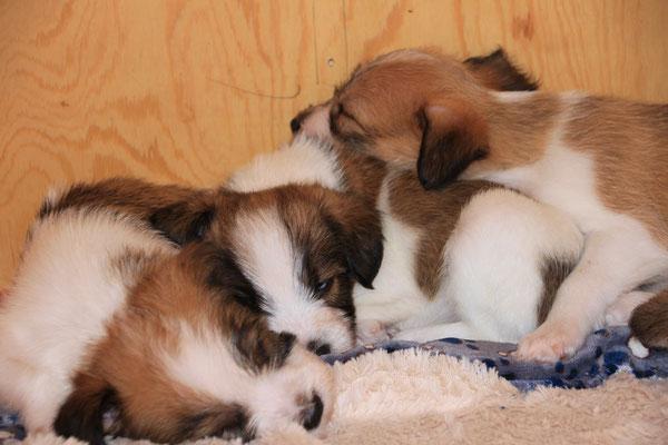 04.01.2019 - 42. Lebenstag: Cookie, Charlie & Cooper